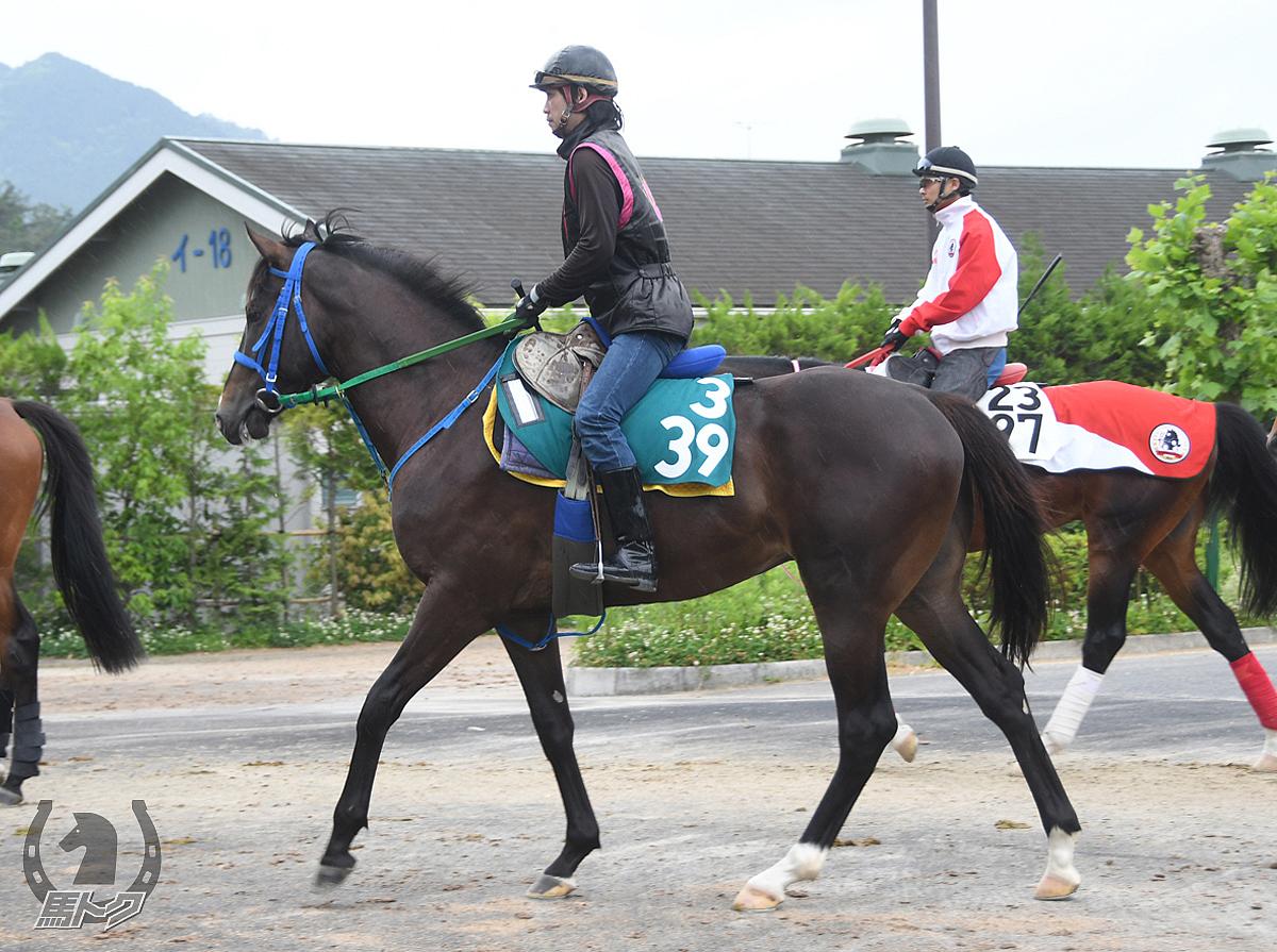 コウザンハリマオの馬体写真
