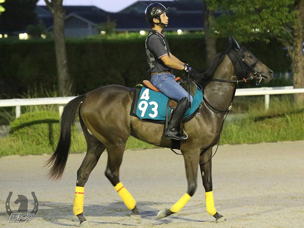 ヤマサカタッシャの馬体写真
