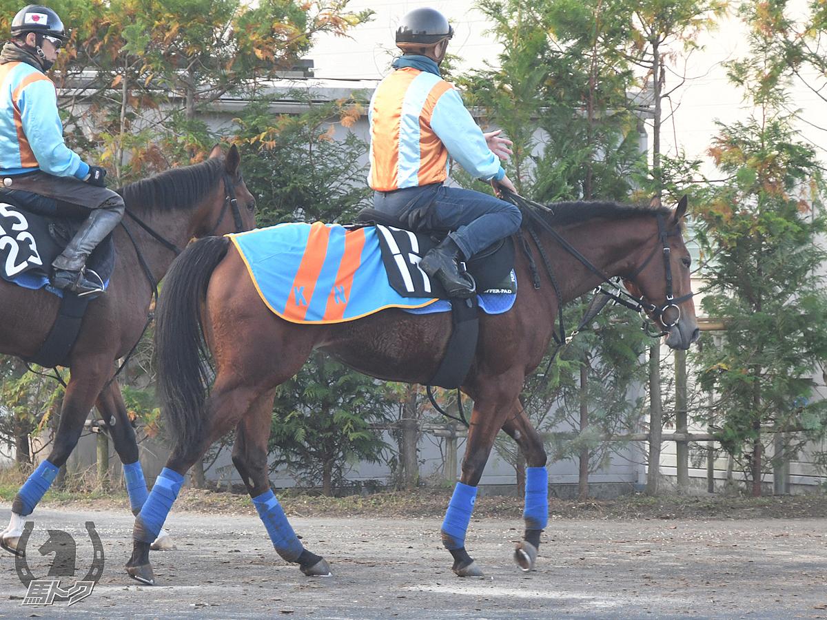グレイトアプローズの馬体写真