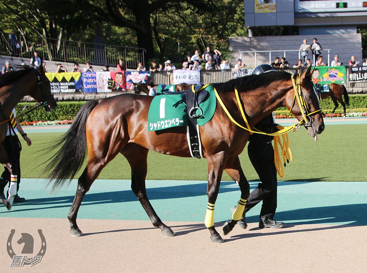 シャドウエンペラーの馬体写真