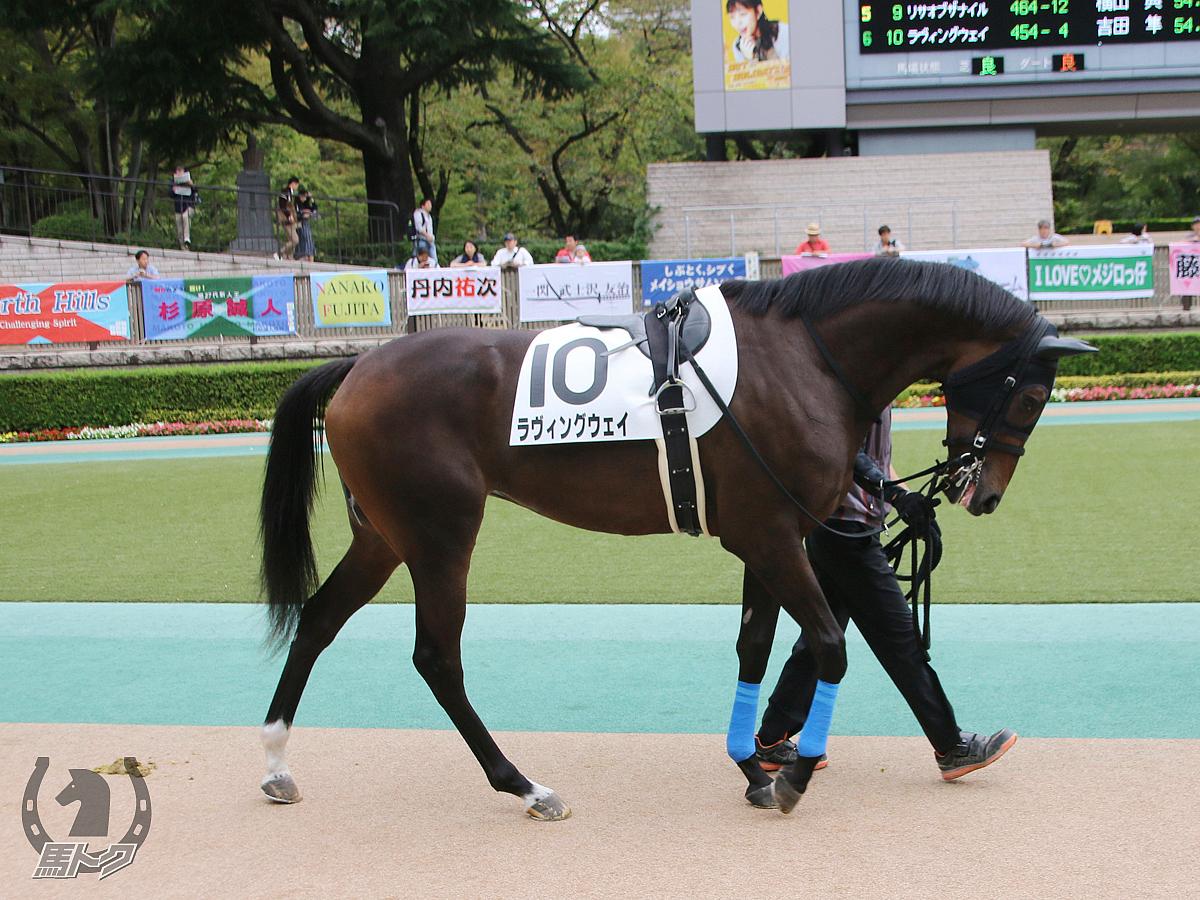 ラヴィングウェイの馬体写真