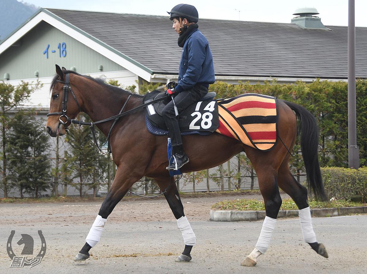 インナーハートの馬体写真
