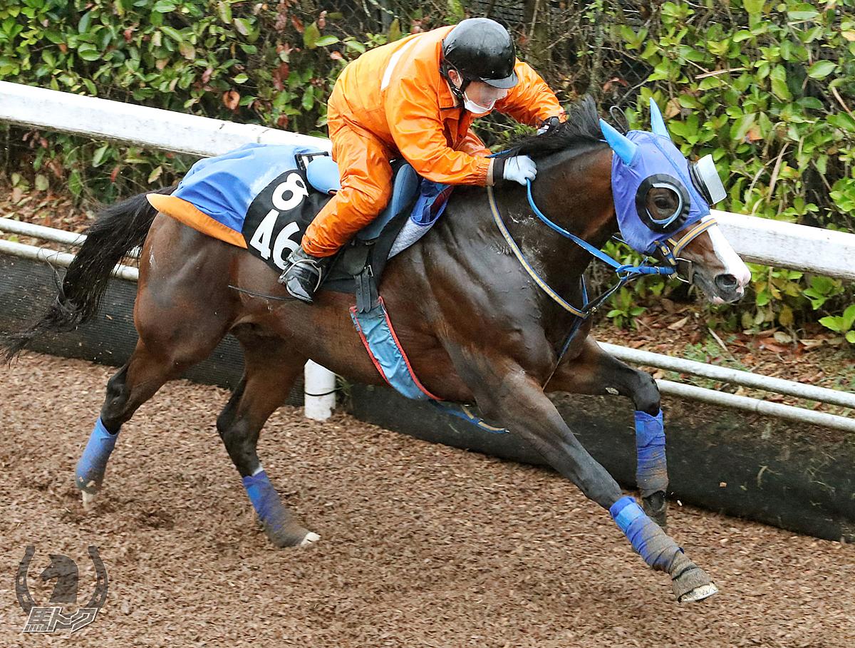 ヒーリングマインドの馬体写真
