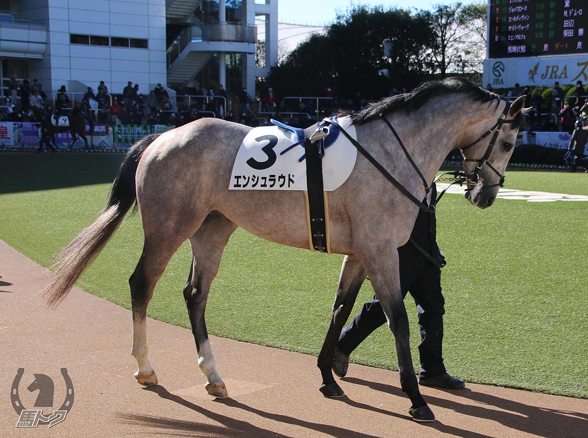 エンシュラウドの馬体写真