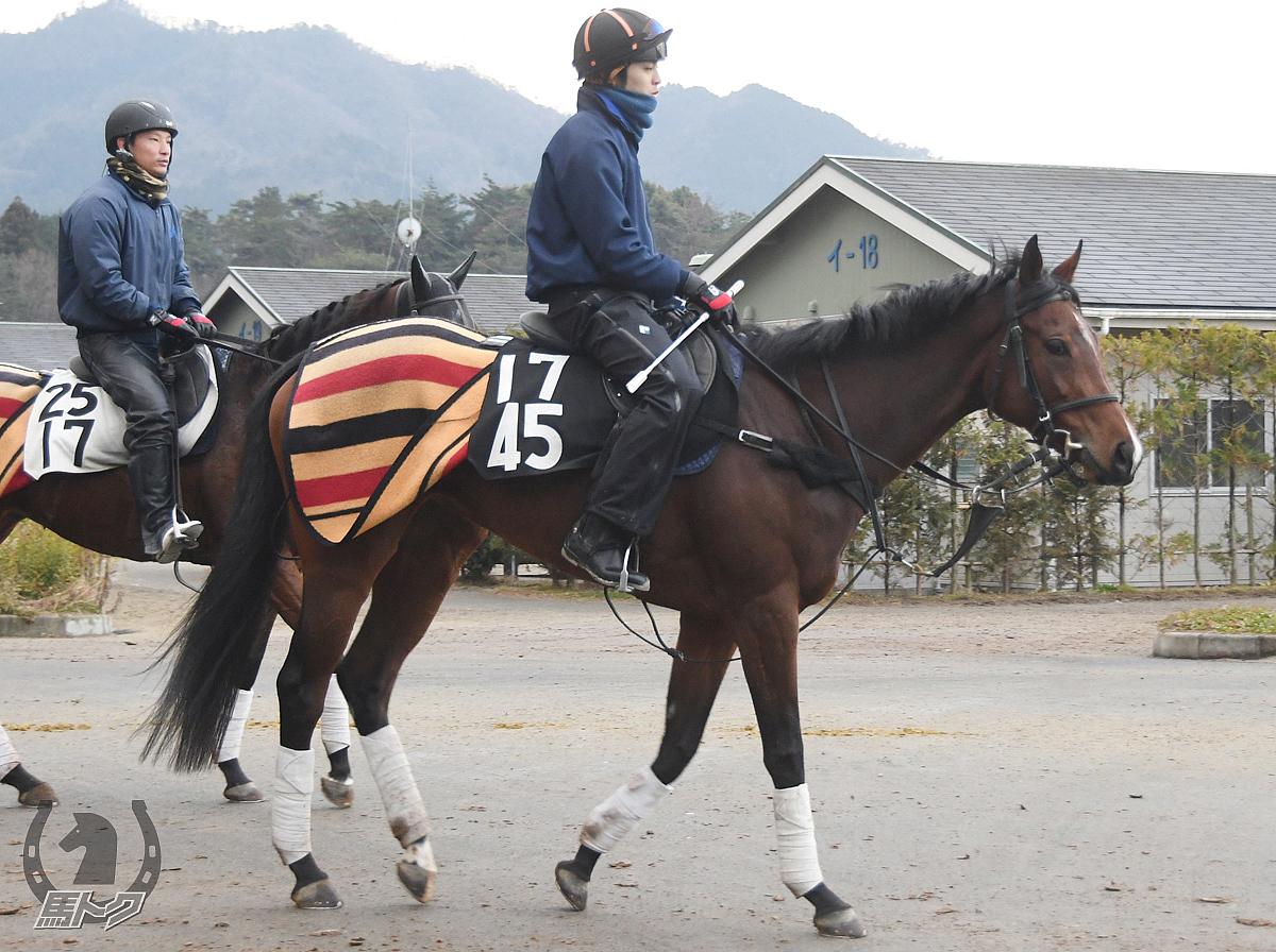 シードラゴンの馬体写真