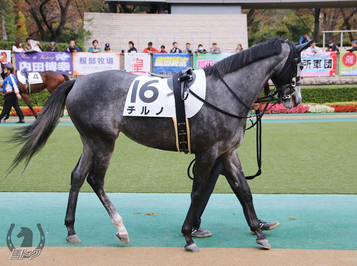 チルノの馬体写真