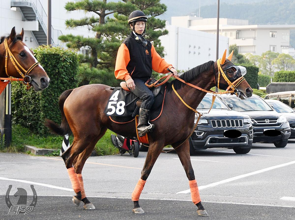 ショウナンアリアナの馬体写真