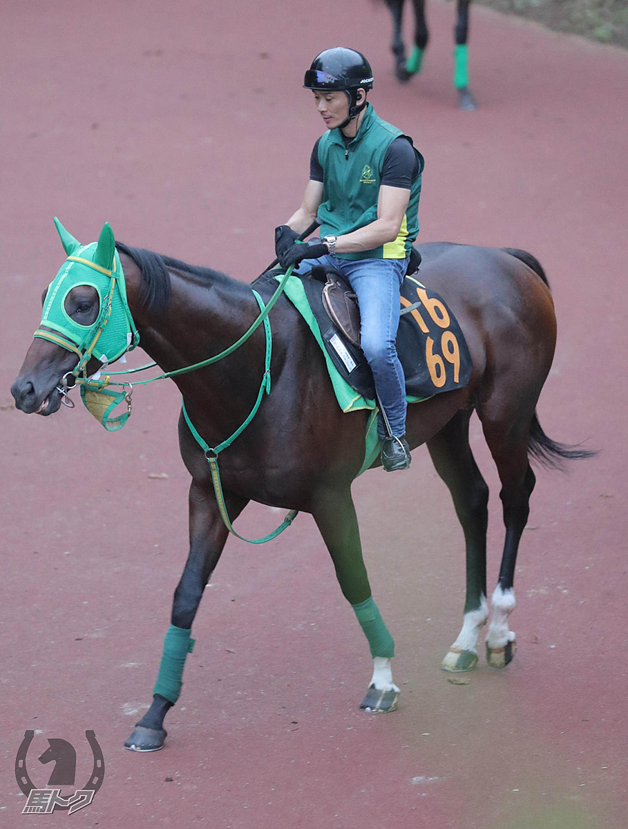 ワシントンテソーロの馬体写真