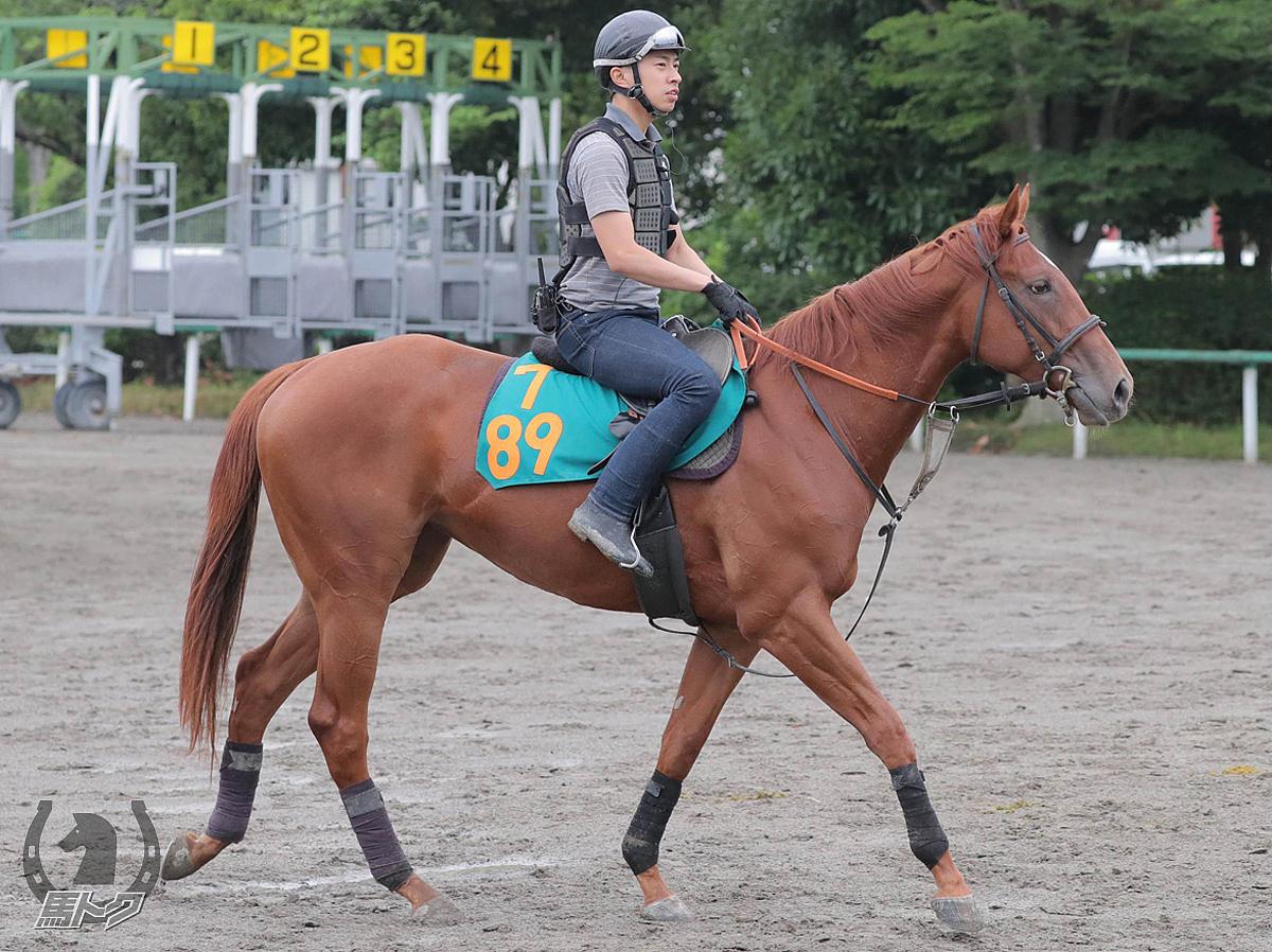 スポーカンテソーロの馬体写真