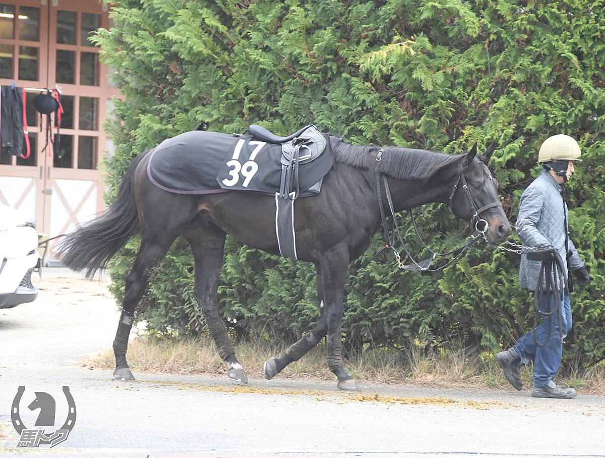スマートアルケミーの馬体写真