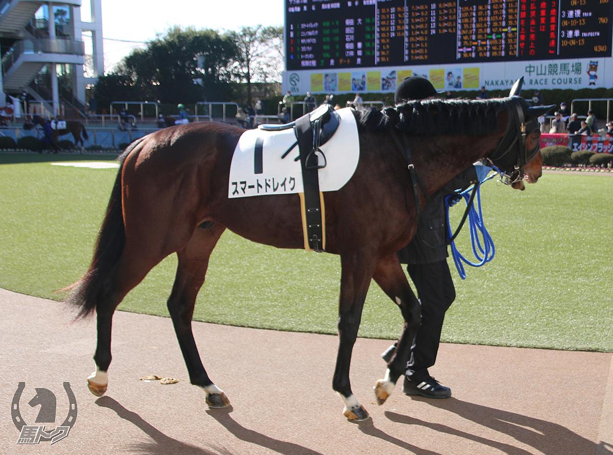 スマートドレイクの馬体写真