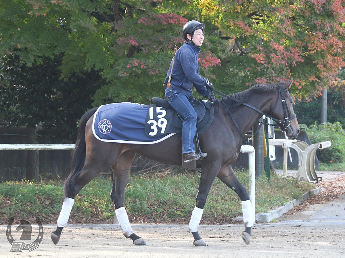 ファインスティールの馬体写真