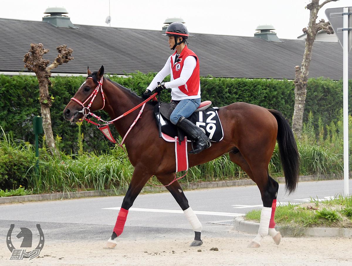 モズエロイコの馬体写真