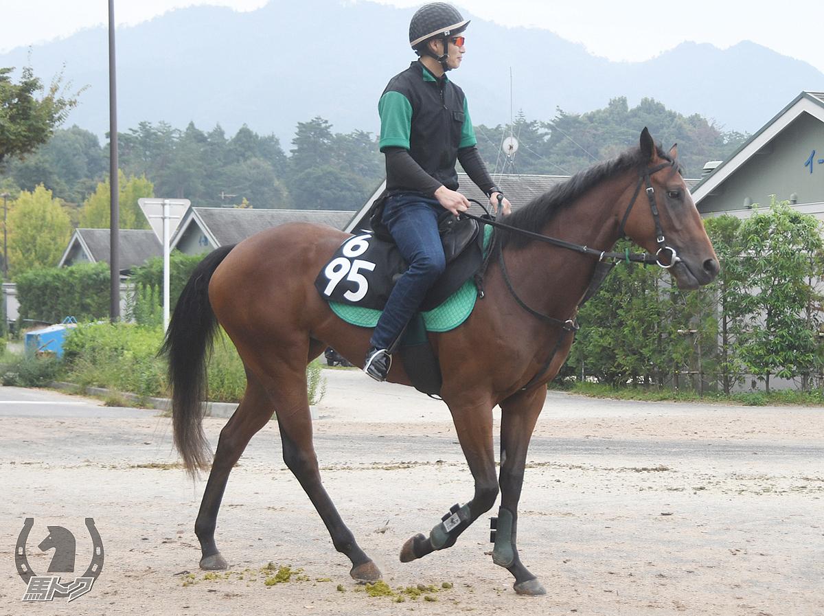 トップソリストの馬体写真