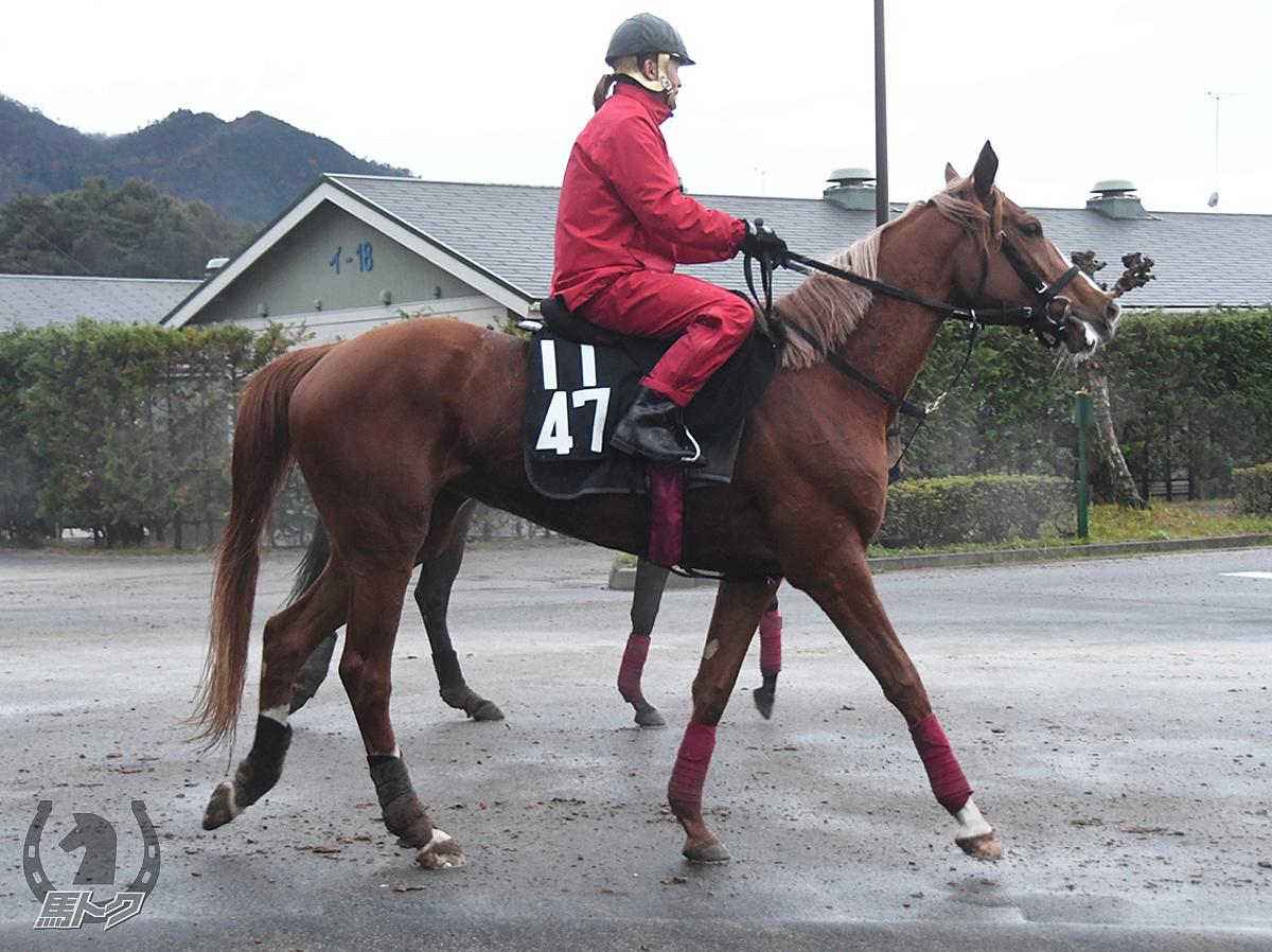 ルリアンフォールの馬体写真