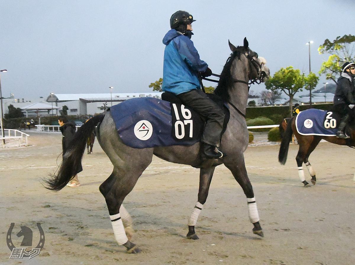 ララクリュサオルの馬体写真