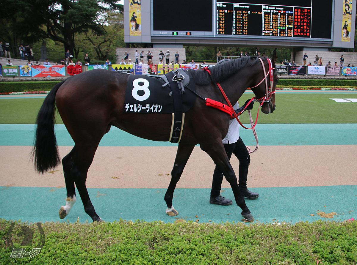 チェルシーライオンの馬体写真