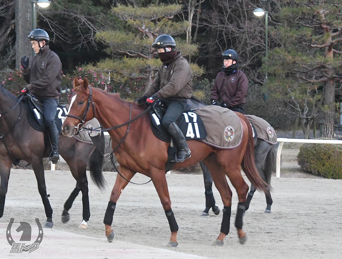 トライレグナムの馬体写真