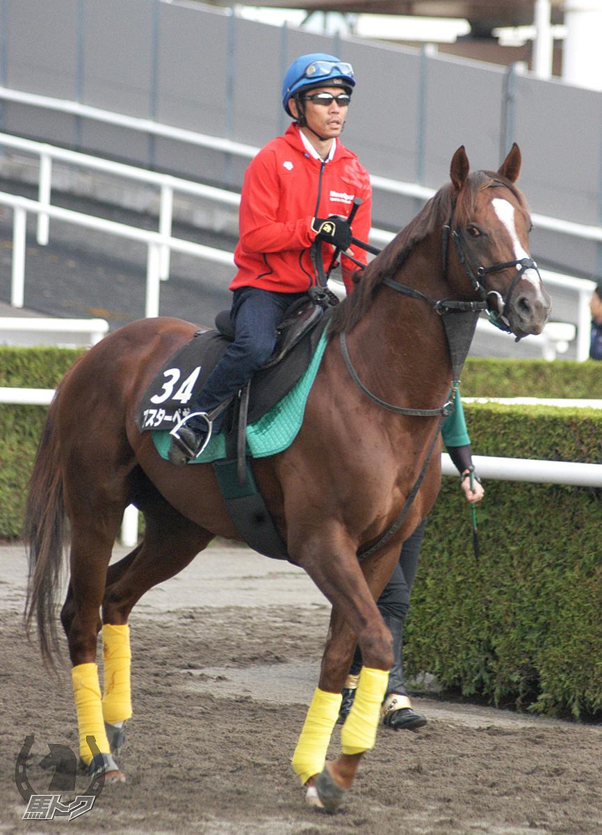 アスターペガサスの馬体写真