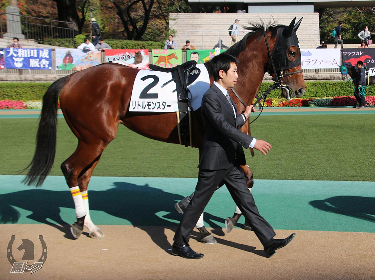リトルモンスターの馬体写真