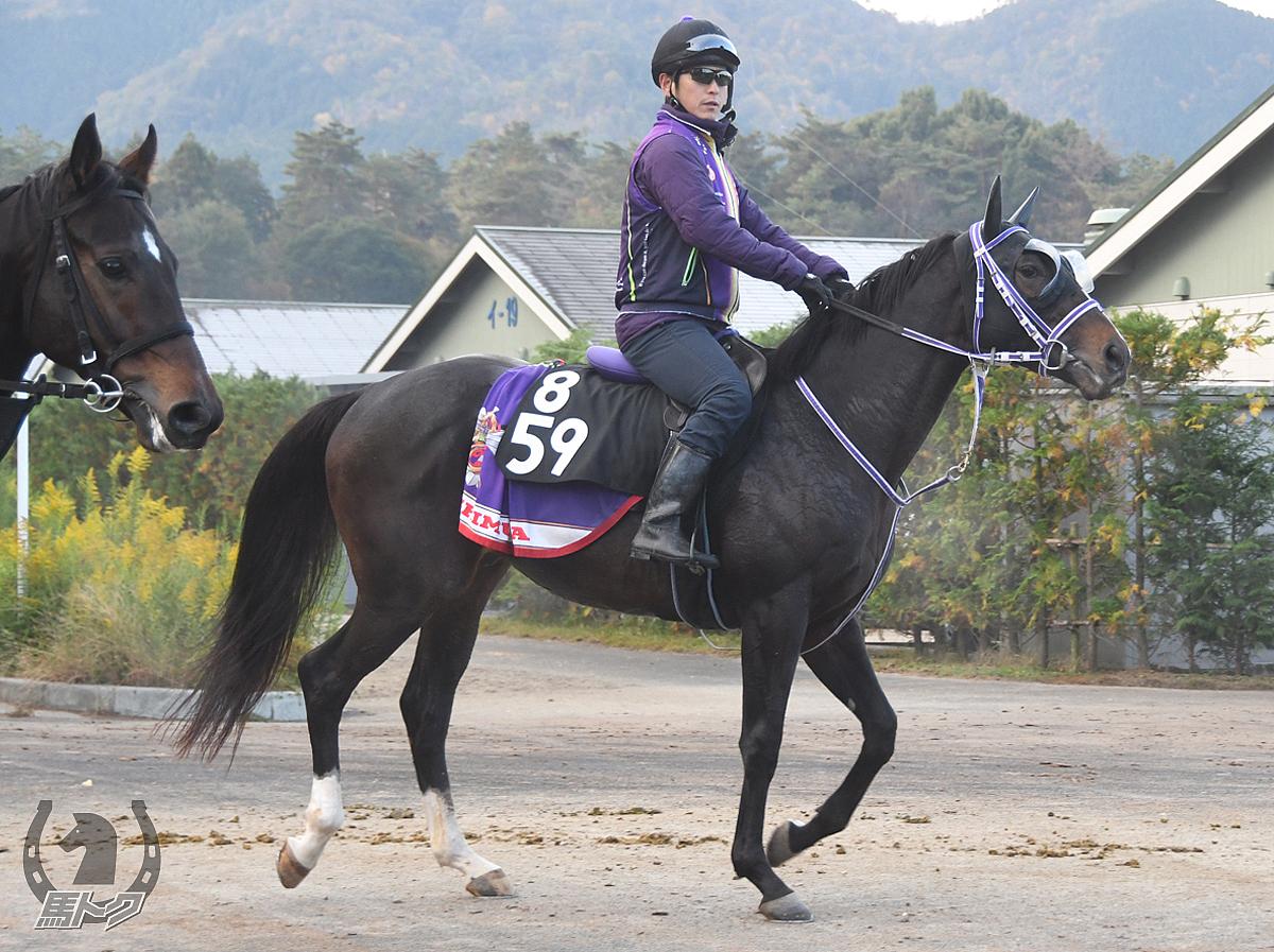 フォートワズワースの馬体写真