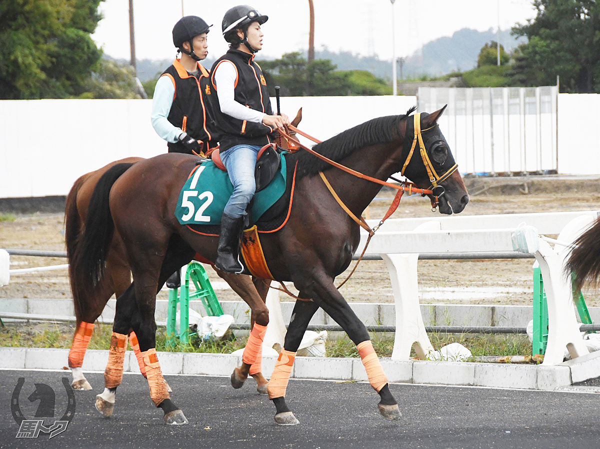 ピースプレイヤーの馬体写真