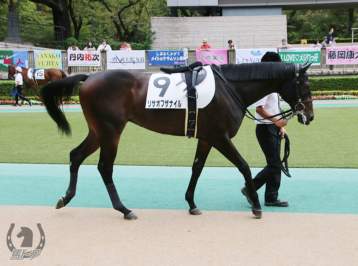 リサオブザナイルの馬体写真
