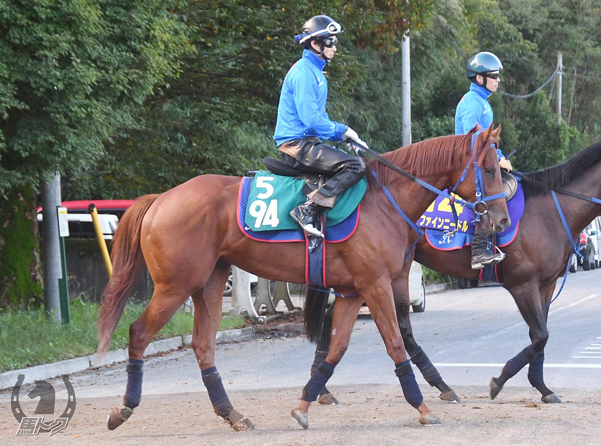 アレンタウンの馬体写真