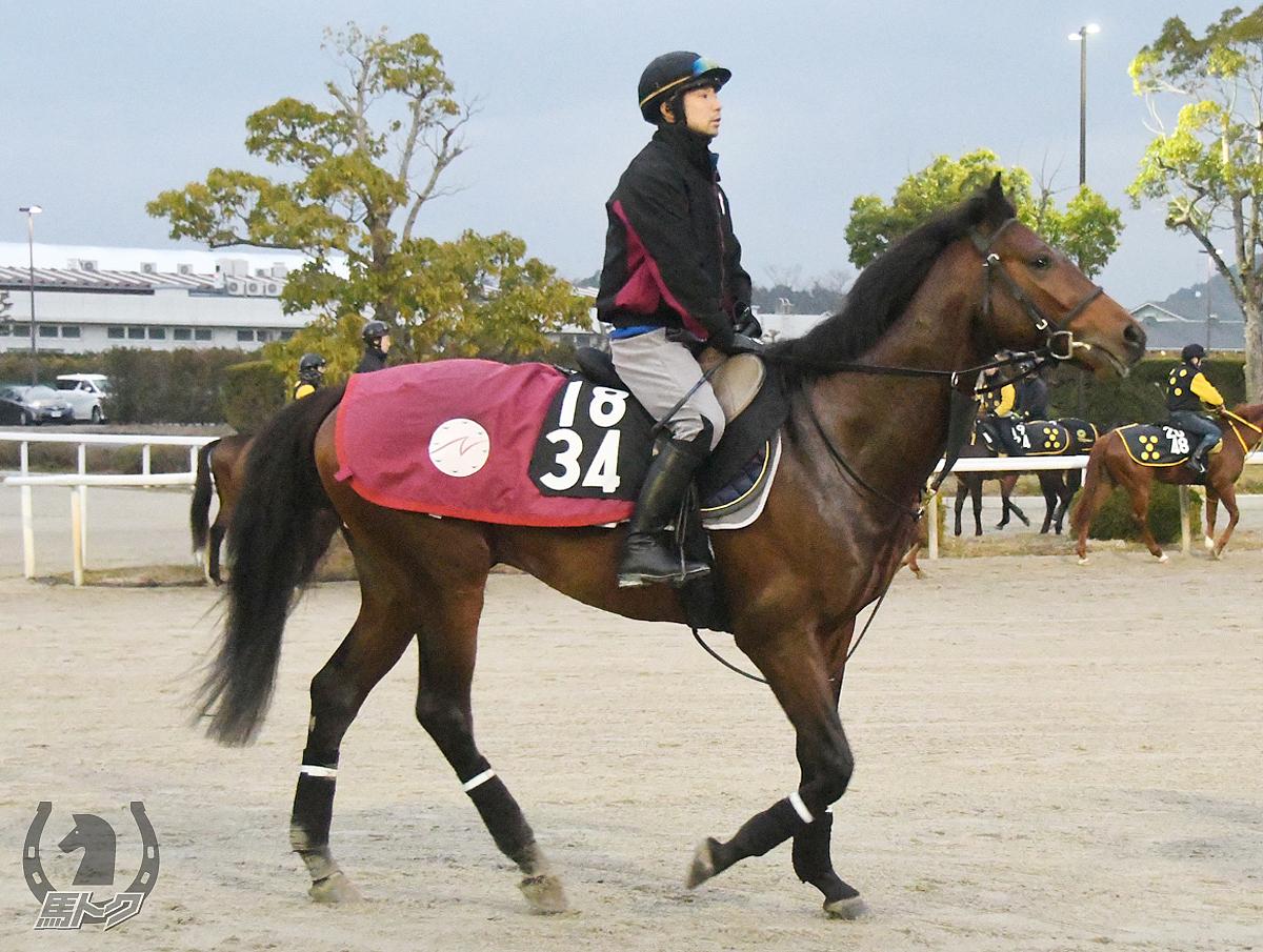 カタールパールの馬体写真