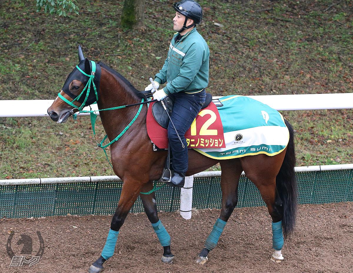 タニノミッションの馬体写真