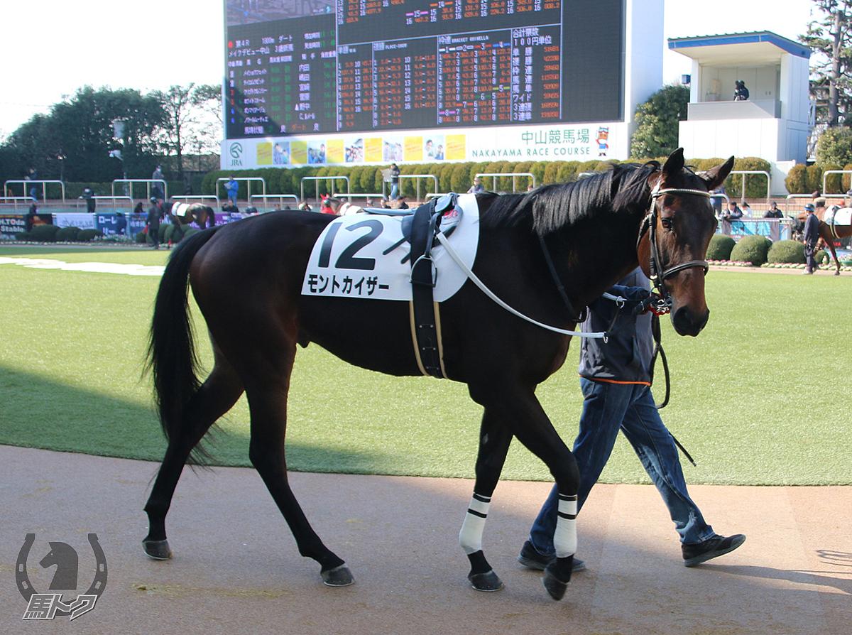モントカイザーの馬体写真
