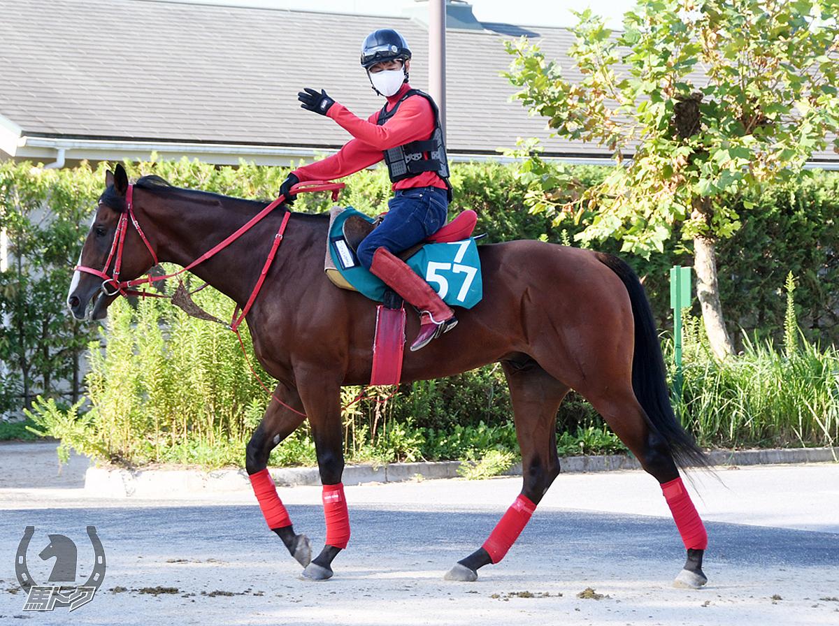 ジャスパージャックの馬体写真