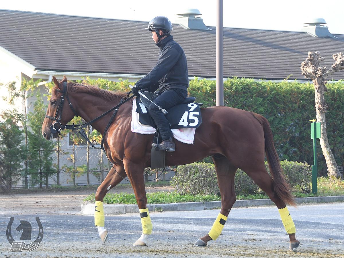 ポンペイワームの馬体写真