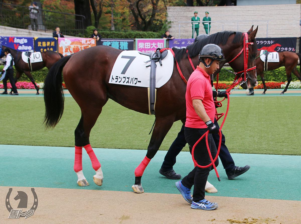 トランプズパワーの馬体写真