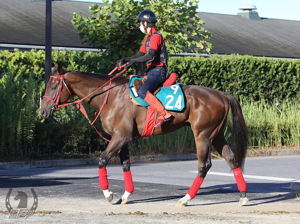 セイウンコービーの馬体写真