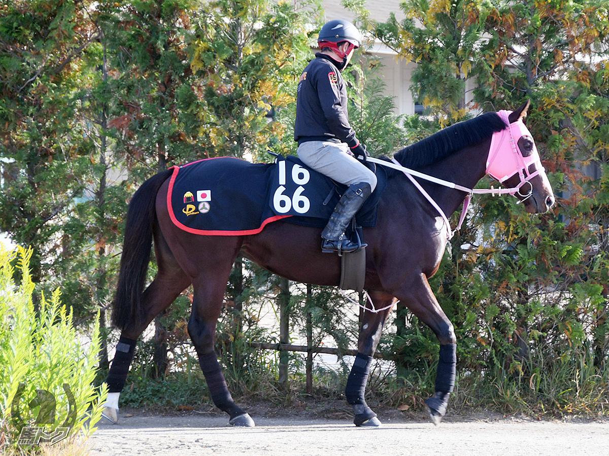 アポロラスベガスの馬体写真