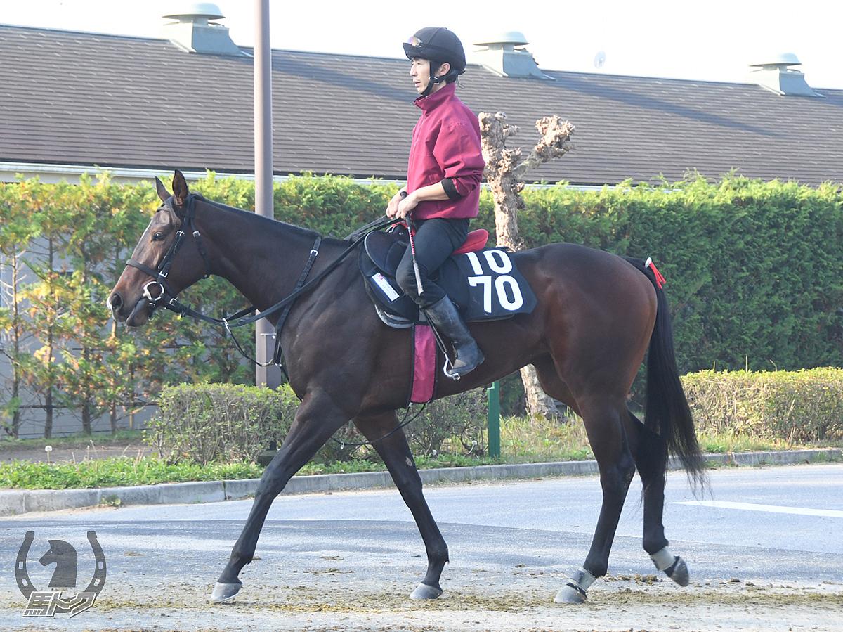 モンペルデュの馬体写真
