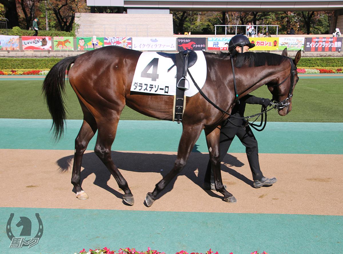 ダラステソーロの馬体写真