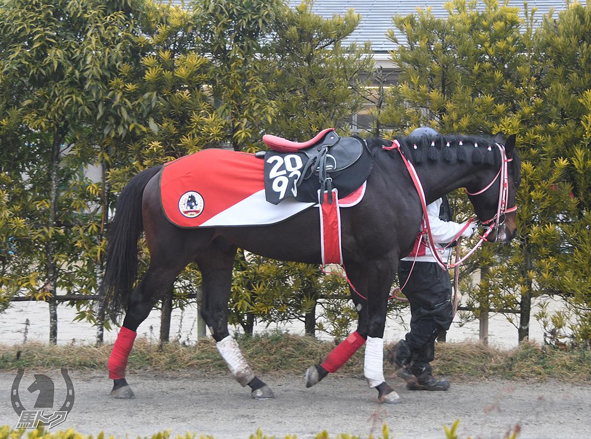 シブヤクロッシングの馬体写真