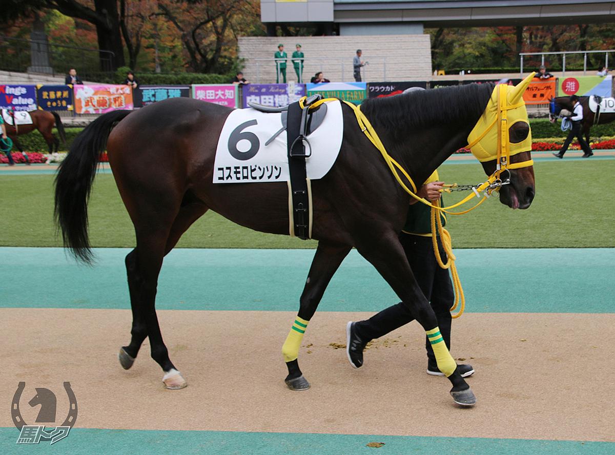 コスモロビンソンの馬体写真