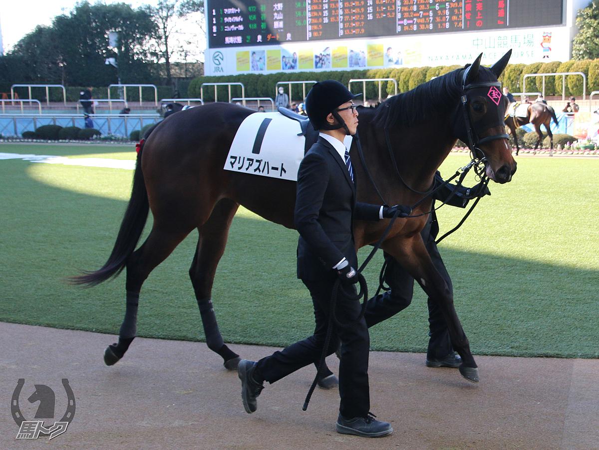マリアズハートの馬体写真