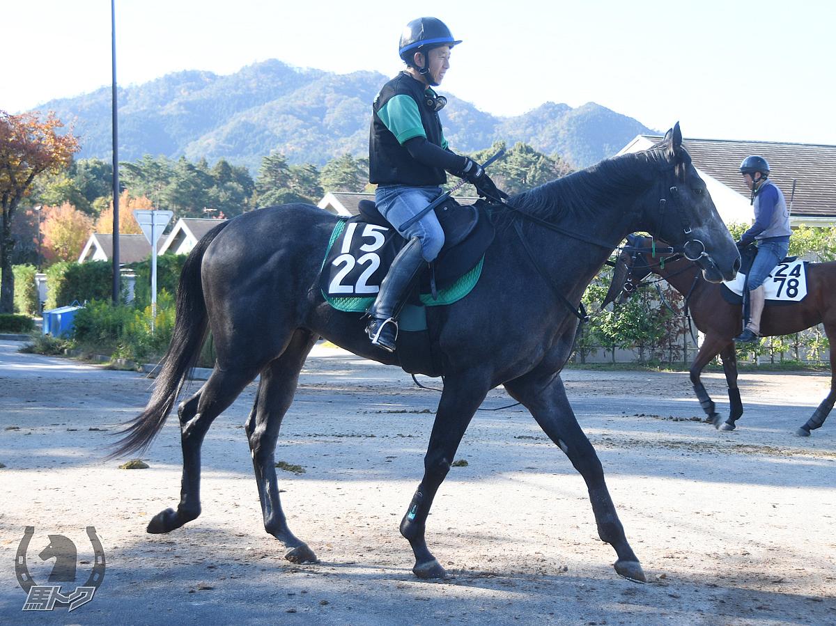 ステラインアテーザの馬体写真