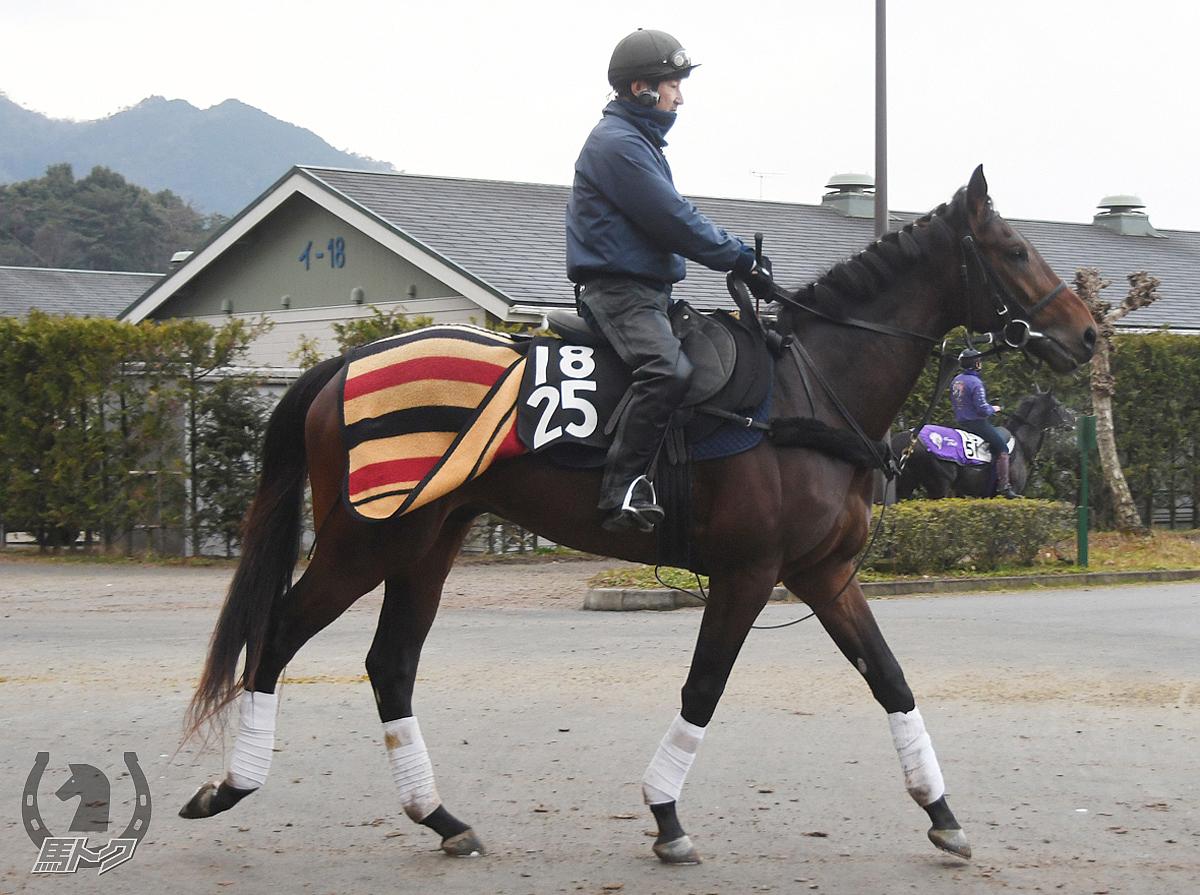 アヴァンセの馬体写真