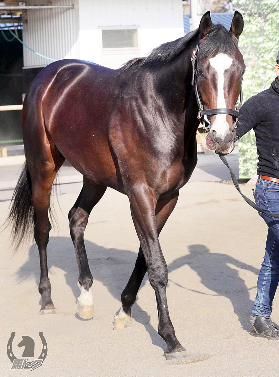 フォッサマグナの馬体写真