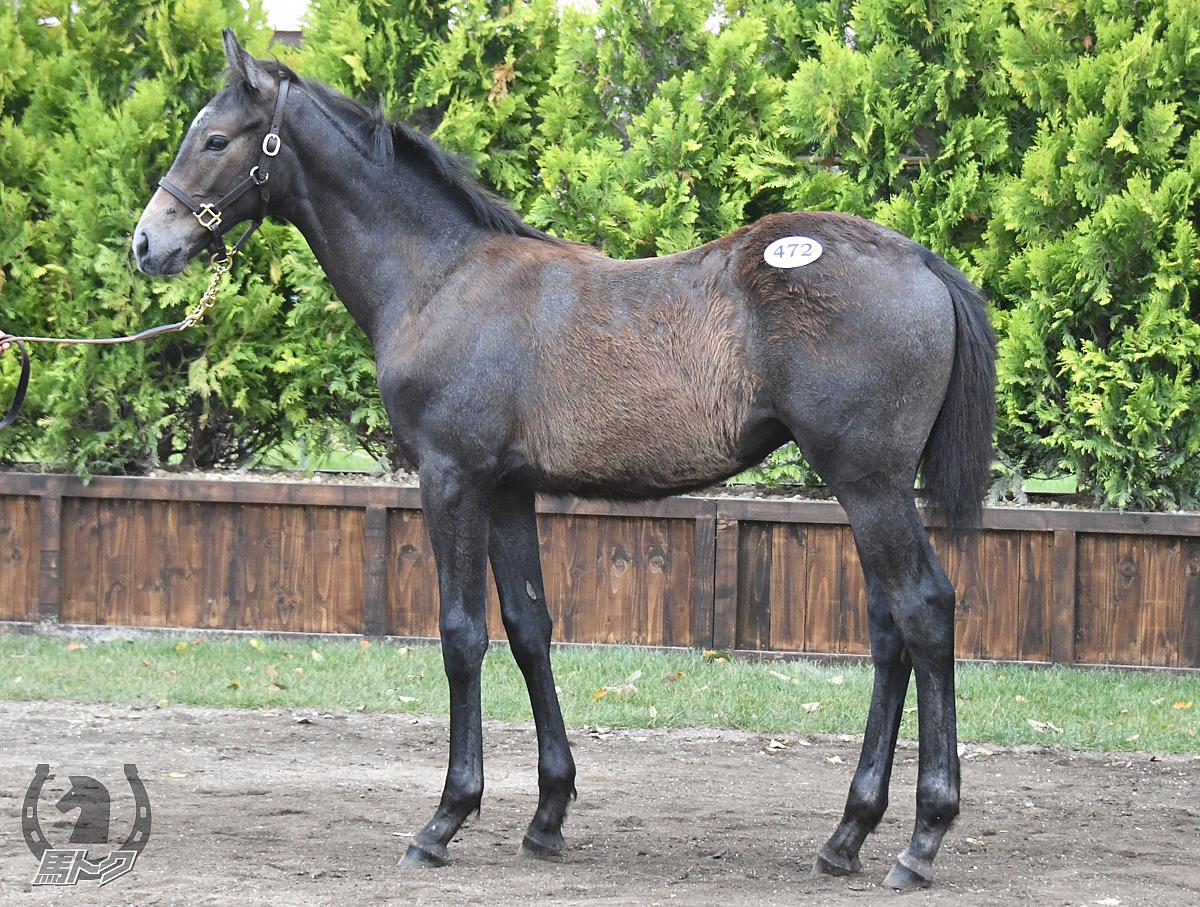 ドンマニフィコの馬体写真