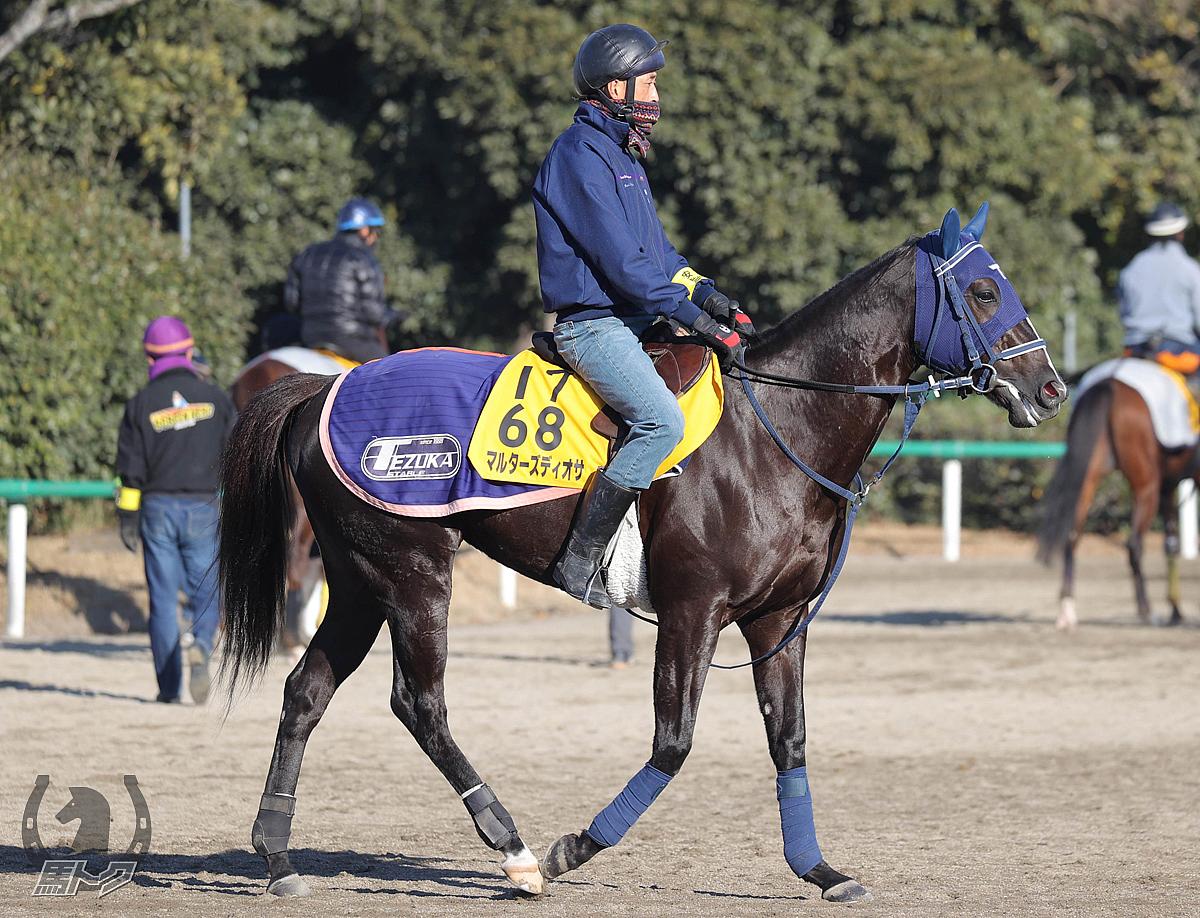 マルターズディオサの馬体写真