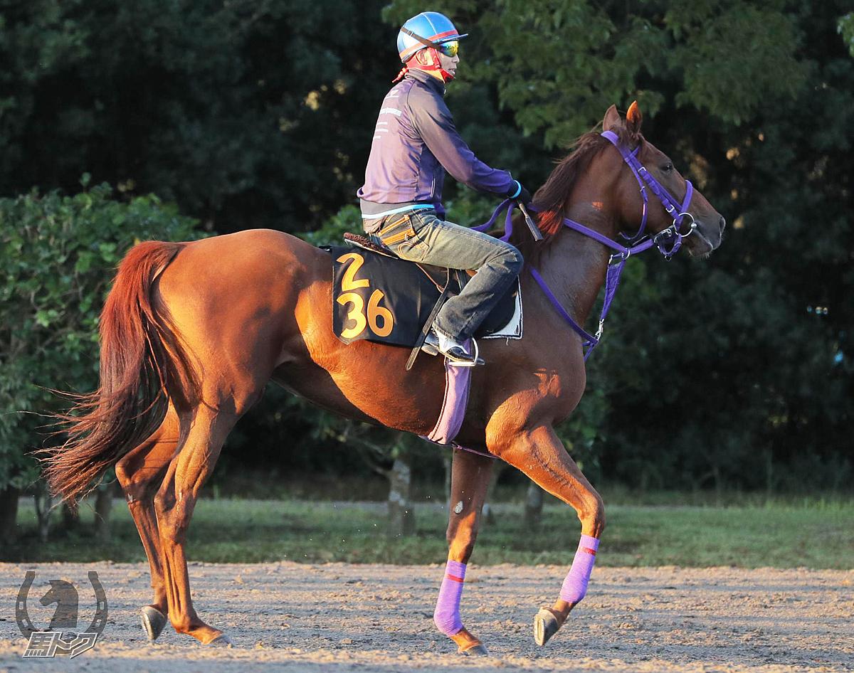 カイアワセの馬体写真