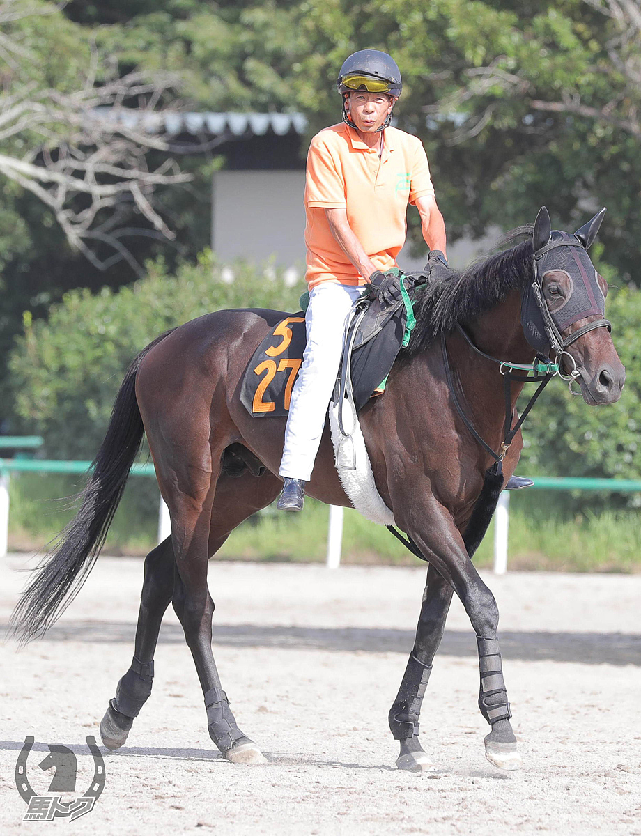 サペラヴィの馬体写真
