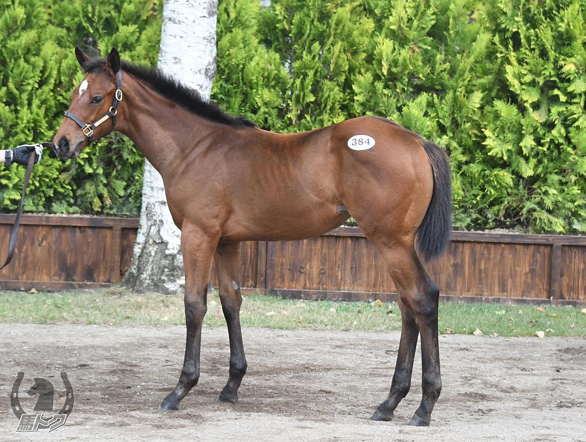 馬名未定(サンドスラッシュの17)の馬体写真