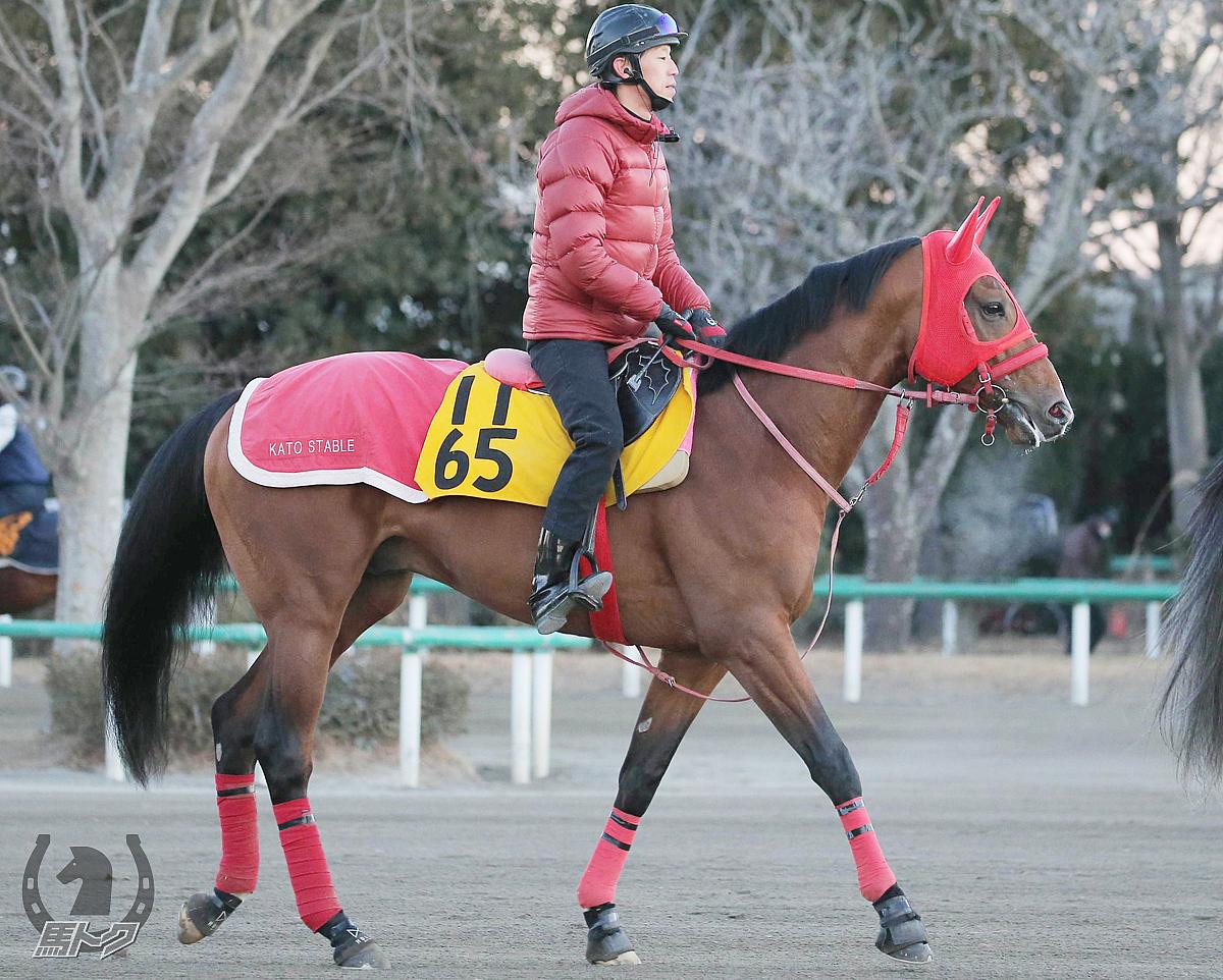 デュードヴァンの馬体写真